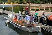 Clam, Taylor Shellfish Samish Farm Store, San Juan Islands, Puget Sound, Washington State