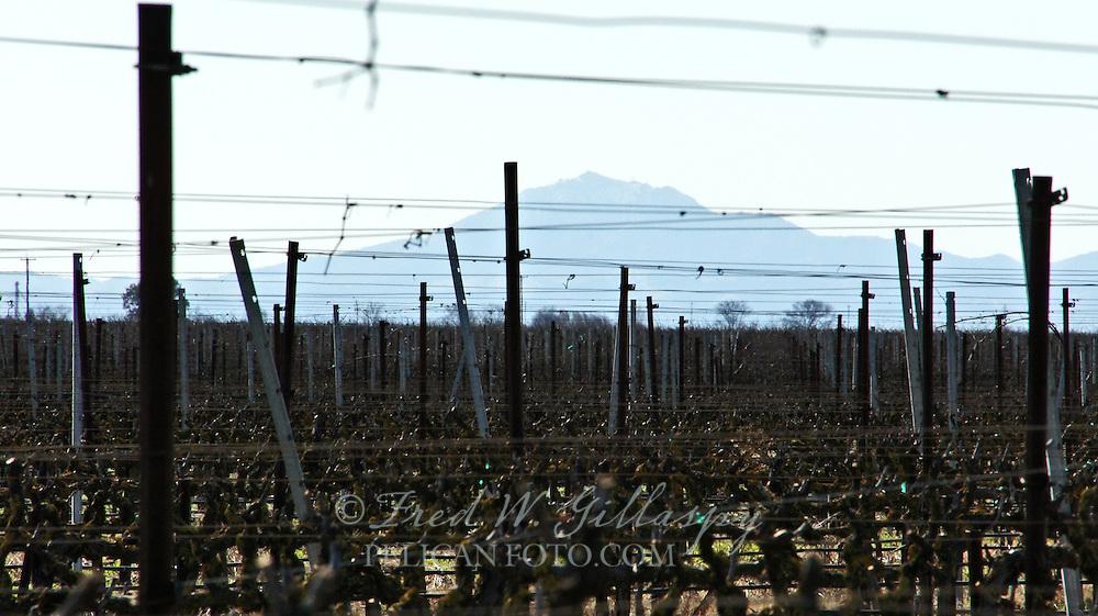 Central Valley Vines - Lodi - Mt. Diablo