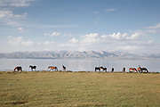 Horses graze on the jailoo (summer pasture) at the south shore of lake Song Köl, Kyrgyzstan