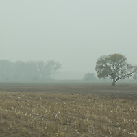 Trees in the fog are seen in Western Hungary (about 200 kilometres west of capital city Budapest), Hungary on Oct. 19, 2017. ATTILA VOLGYI