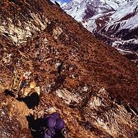 A yak driver and his animals below Mt. Ama Dablam in the Khumbu region of Nepal. 1979