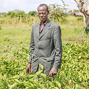 CAPTION: Christopher Onyimo has gained detailed knowledge of conservation agriculture from training provided by World Renew partner organization, the Kaberamaido Mission Development Program. Here, we see him surrounded by his mucuna plants, which are particularly useful in agricultural conservation. LOCATION: Apapai Parish, Otuboi Sub-county, Kalaki County, Kaberamaido District, Uganda. INDIVIDUAL(S) PHOTOGRAPHED: Christopher Onyimo.