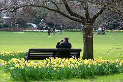 © Licensed to London News Pictures. 21/03/2019. Greenwich, Spring is in the air today in Greenwich park with warmer weather and yellow daffodils.  Photo credit: Grant Falvey/LNP