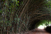 Botelhos_MG, Brasil...Estrada de terra em Botelhos...The dirt road in Botelhos...Foto: LEO DRUMOND / NITRO
