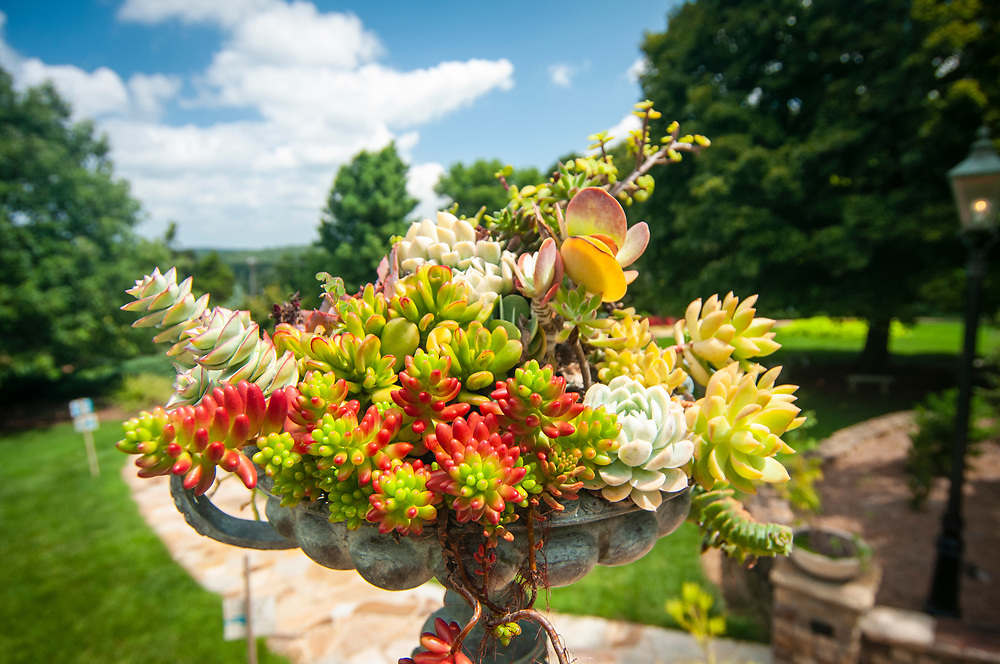 Plant arragements at the Baker Arboretum & Downing Museum in Bowling Green, Kentucky on Thursday, August 17, 2017. Copyright 2017 Jason Barnette
