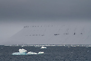 Arctic landscape and melting sea ice floes, Svalbard, Spitzbergen, Arctic NorwaySvalbard, Spitzbergen, Arctic Norway
