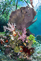 Soft Corals thrive under a Mangrove Forest<br /> <br /> Shot in Indonesia
