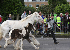 Wickham Horse 2016