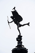 A black crow  in silhouette sits on top of the famous statue of Eros at Piccadilly on 3rd March 2021 in London, England, United Kingdom. Piccadilly Circus is a famous road junction and public space of Londons West End in the City of Westminster, built in 1819 to connect Regent Street with the major shopping street of Piccadilly.