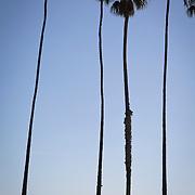 A warm, Fall afternoon in Santa Barbara, CA.