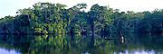ECUADOR, AMAZON BASIN Napo River, dugout canoe in rainforest