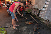 Burning skin and preparing dogs for sale at Tomohon extreme market, Minahasa, north Sulawesi, Indonesia.