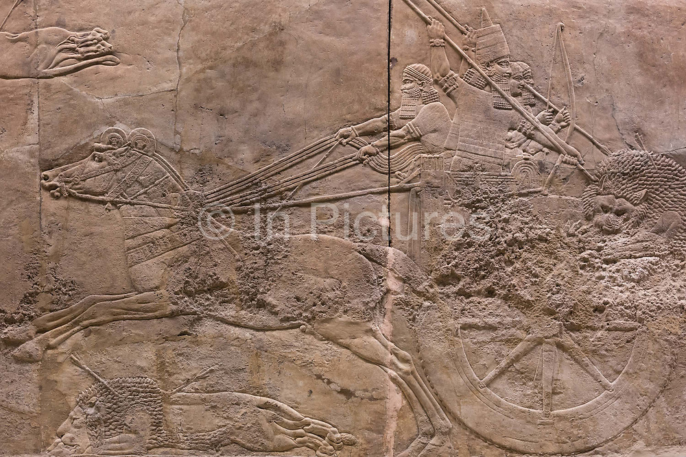 A detail from a stone carving depicting the royal lion hunt of the Assyrian king Ashurbanipal, at the British Museum, on 11th April 2018, in London, England. It is part of the palace at Nineveh and dates to about 645-635 BC. Captured lions, which had been a menace to domestic animals as well as to men, were released one-by-one from cages into an arena surrounded by dogs and soldiers with tall shields to keep any from escaping. They then were shot by the king from his chariot.