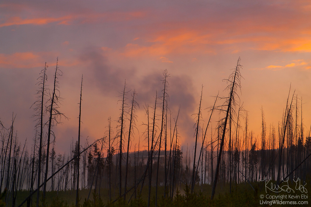 Steam from vents, or fumaroles, in the Norris Basin of Yellowstone National Park, Wyoming, rises at sunrise.