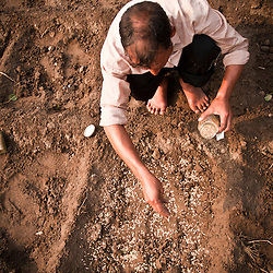 A farmer fills a plot with seed.