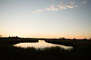 Shinnecock Bay, Marsh, Quogue, NY