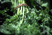 Close up selective focus photograph of some Kale bundles