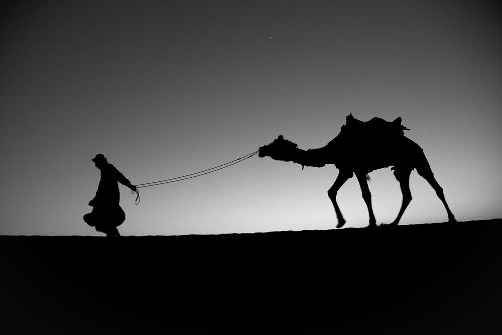 Thar Desert, India. Before the fall of the night, a nomadic shepherd from Rajasthan is returning to the camp with his camel.<br /> Photo by Lorenz Berna