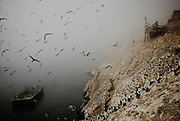 """Sacks of guano are loaded into ships from a """"cabria"""" in Guañape Norte Island in the coast off Peru, April 2009."""