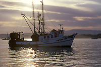Fishing Boat moored  in the harbor, Monterey Bay, CA
