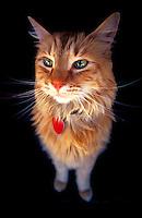 Portrait of cat.