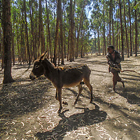 Boy and Donkey by Fatuma Nurade