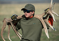Paedon Hare of Boy Scout Troop 67 carries a pair of elk antlers while picking up the sheds Saturday on the National Elk Refuge. Once a year the scouts are allowed to pick up the antlers, which are then sold at the annual ElkFest auction in mid-May.