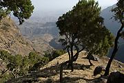 Trees, Simien Mountains National Park, Ethiopia, 3260m 10,700ft high, escarpment edge near Buyit Ras