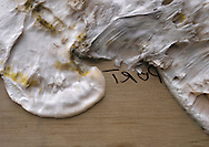 dry rot<br /> Serpula lacrymans