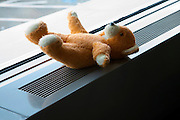 teddy bear left behind on a window sill inside