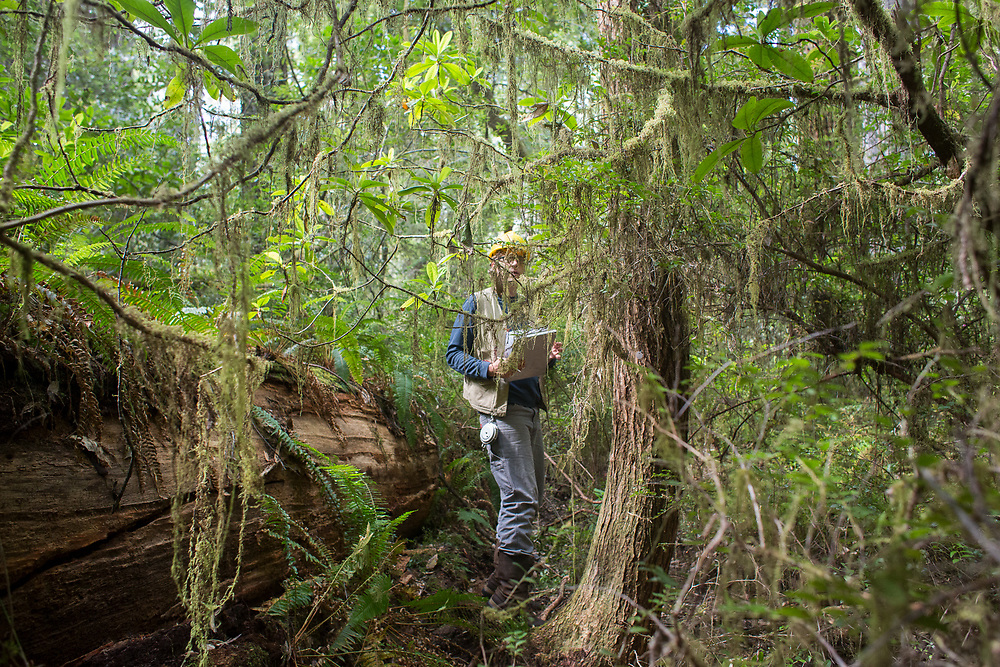 USGS Field Ecologist Philip van Mantgem  is conducting a long term study of tree mortality and demographics throughout the West. One goal of the project is to learn how to better manage forests for tree health during the protracted droughts that climate models predict will become only more severe.  Photographed in Redwood National Forest, May 20, 2016.