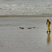 Man collecting cockles on a beach