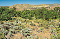 Extremely dry and arid throughout the year, White Pass in Central Washington experiences a boom in greenery as spring turns into summer.