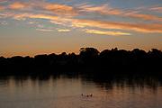 Ducks swimming in a scenic river at sunrise
