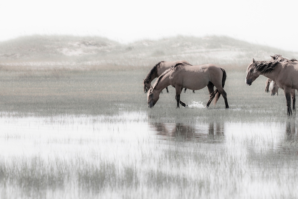 """""""It's the moments that I stopped just to be, rather than do, that have given me true happiness"""" ~ Richard Branson<br /> <br /> Tracie Spence's fine art photography series of The Spanish Wild Mustangs."""