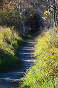 Morning sunshine lights up a hiking trail in Acadia National Park, Maine.