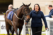 Show Me Heaven ridden by Ryan White and trained by Bill Turner in the CB Protection Novice Median Auction Stakes.  - Ryan Hiscott/JMP - 06/05/2019 - PR - Bath Racecourse- Bath, England - Kids Takeover Day - Monday 6th April 2019
