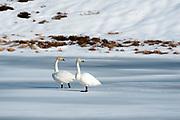 Ostadvatnet frozen lake, Lofoten Islands, Norway.