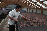 Justiniano Bol Junior, 26, Mopan Mayan cacao grower and TCGA's field extension officer, dries Cacao beans at the San Antonio office. Justiniano has been TCGA's field extension officer at the San Antonio branch for four years and is the son of Justiniano and Florentina Bol, both life-long cacao growers and long term TCGA members. Justiniano Junior plans to continue growing cacao in the Toledo region as his family has for generations. Toledo Cacao Growers' Association (TCGA), San Antonio, Toledo, Belize. January 25, 2013.