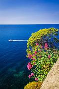 Tour boat and cliffside flowers in Corniglia, Cinque Terre, Liguria, Italy