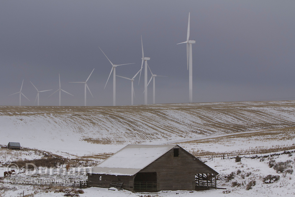 Wind turbines rise above the winter landscape and a horse barn near the Columbia River Gorge, Oregon.