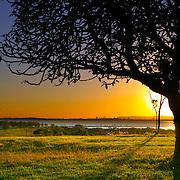Tree silhouette, Brisbane, Australia (November 2003)