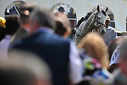 27 March 2010 : RELEAR is walked in the paddock before the third race, a timber race at the Carolina Cup.