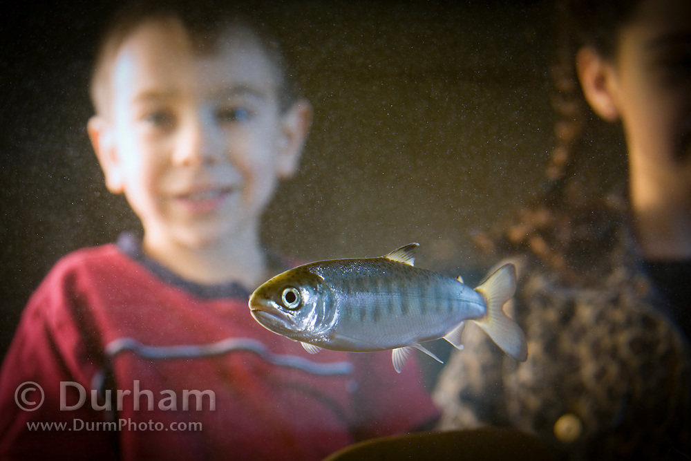 A four year old boy and young girl observe a coho salmon fry (Oncorhynchus kisutch), an endangered species, in an aquarium at the water Resources Education Center in Washington. (Fully Released)