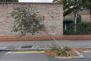 A bent young tree leans at 45 degrees in a south London side street, on 11th September, 2017, in London, England.