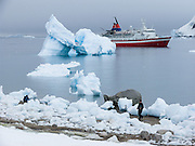 """The red and white ship M/S Explorer anchors near an arched blue iceberg at Neko Harbor, Graham Land, the north portion of the Antarctic Peninsula, Antarctica (in February 2005). Nearby glaciers calve icebergs which melt into the Southern Ocean or dissolve in chunks washed onto the beach. Scientists have measured temperatures on the Antarctic Peninsula as warming faster than anywhere else on earth. An overwhelming consensus of world scientists agree that global warming is indeed happening and humans are contributing to it through emission of heat-trapping """"greenhouse gases,"""" primarily carbon dioxide (see www.ucsusa.org). Since the industrial revolution began, humans have increased atmospheric CO2 concentration by 35% (through burning of fossil fuels, deforesting land, and grazing livestock)."""