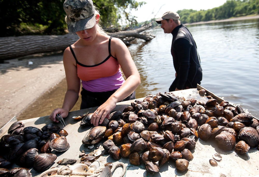 Shelby Marr, a specialist with the Minnesota Department of Natural Resources, sorts mussels collected in the Mississippi River near Pike Island August 14, 2015.  The mussels are kept cool and wet while counted, identified, and measured before they are returned to the river.