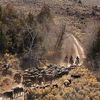 SSF / NTH Ranch