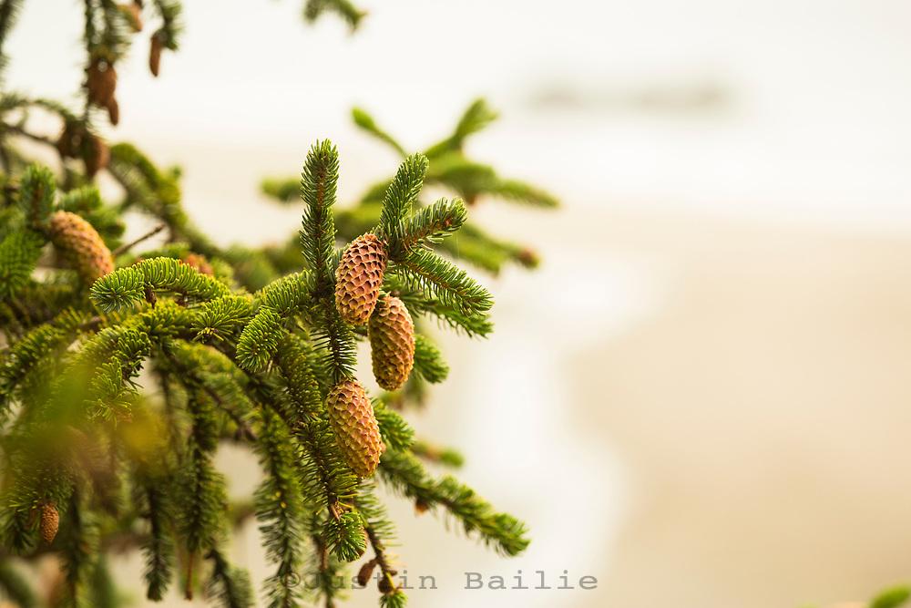 Whaleshead Beach. Samuel H. Boardman State Park, Oregon.