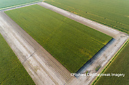 63801-10807 Corn field after it's been cut for silage-aerial Marion Co. IL